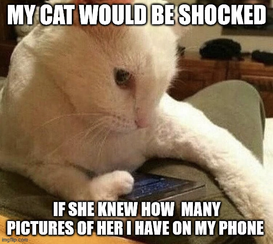Meme of cat holding a cellphone. Text: My cat would be shocked if she knew how many pictures of her I have on my phone