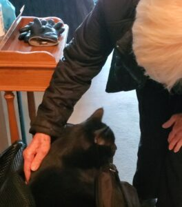 Older lady bends down to pet a pure black cat as it emerges from a soft-sided carrying case.