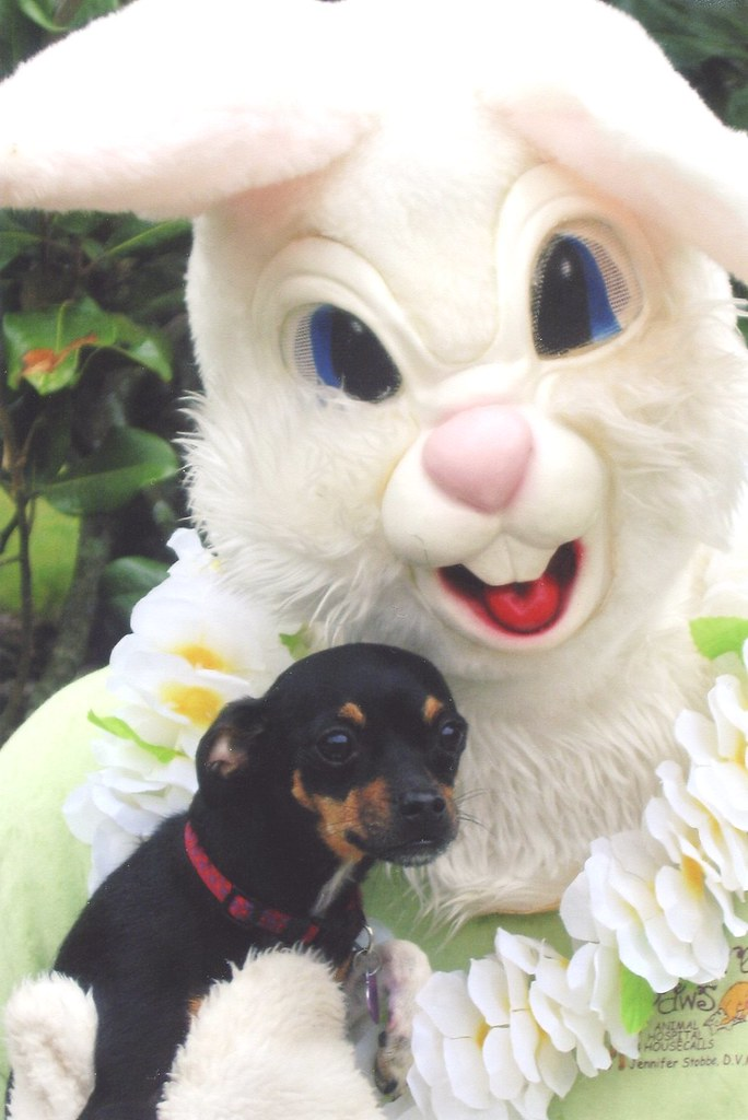 A frighteningly giant bunny holds a little dog that looks terrified.