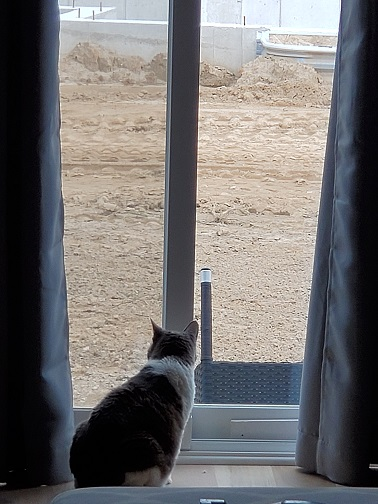 Sugar looking out the patio doors at dirt.